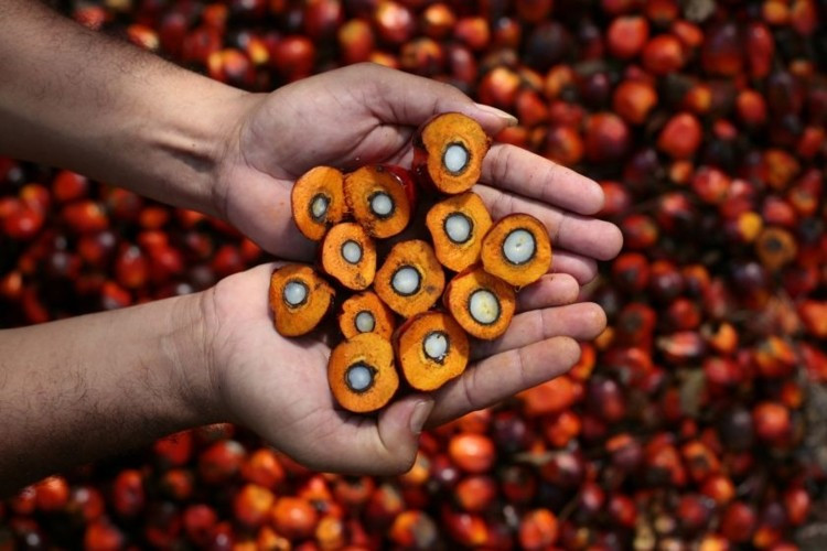 Palm Oil Mill Specialist Malaysia