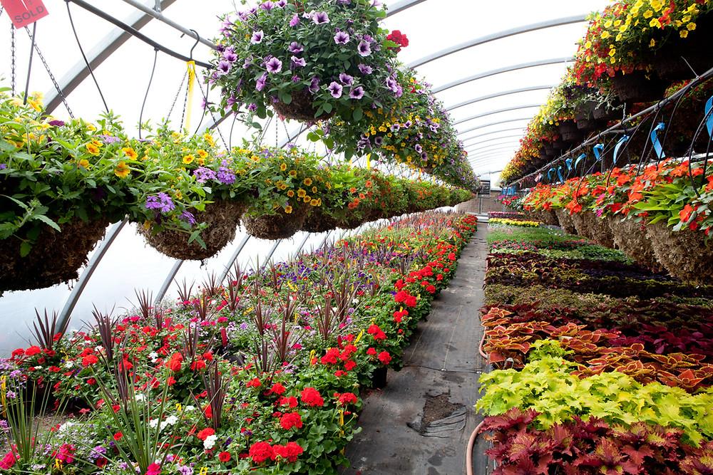 Plant Nursery Malaysia