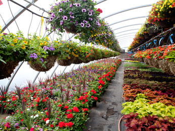 Plant Nursery Supplier Malaysia | Garden Landscape Contractor