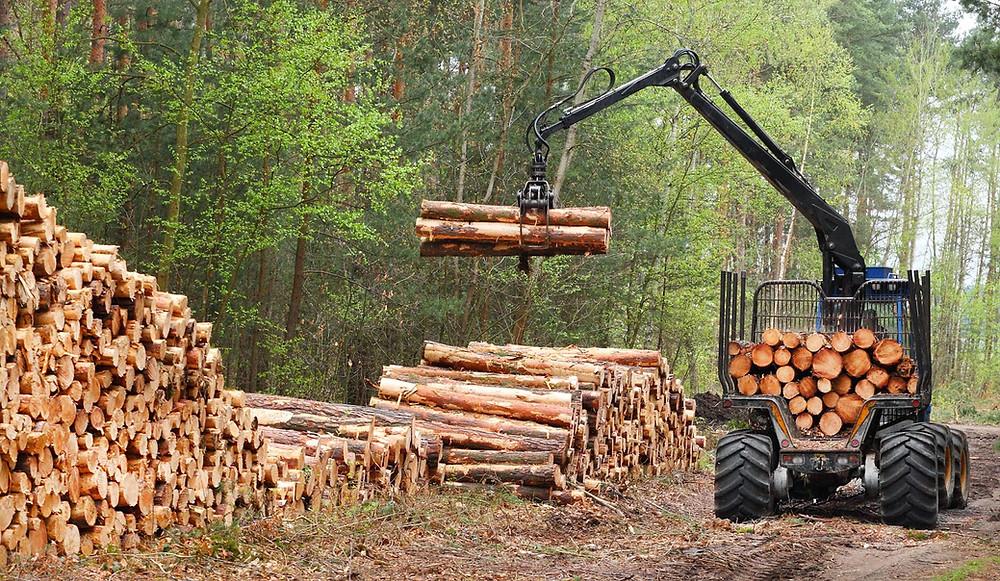 Timber Stockist Malaysia