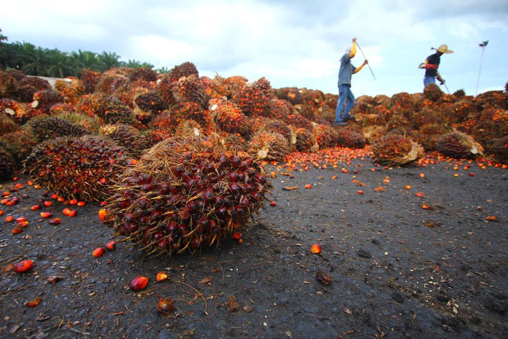 Palm Oil Engineering Contractor Malaysia