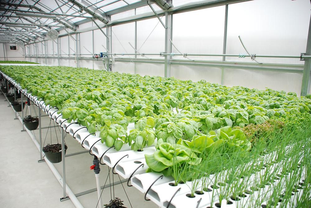 Greenhouse Farming Malaysia