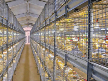 Cage Supplier Malaysia | Livestock & Poultry Farm Equipment