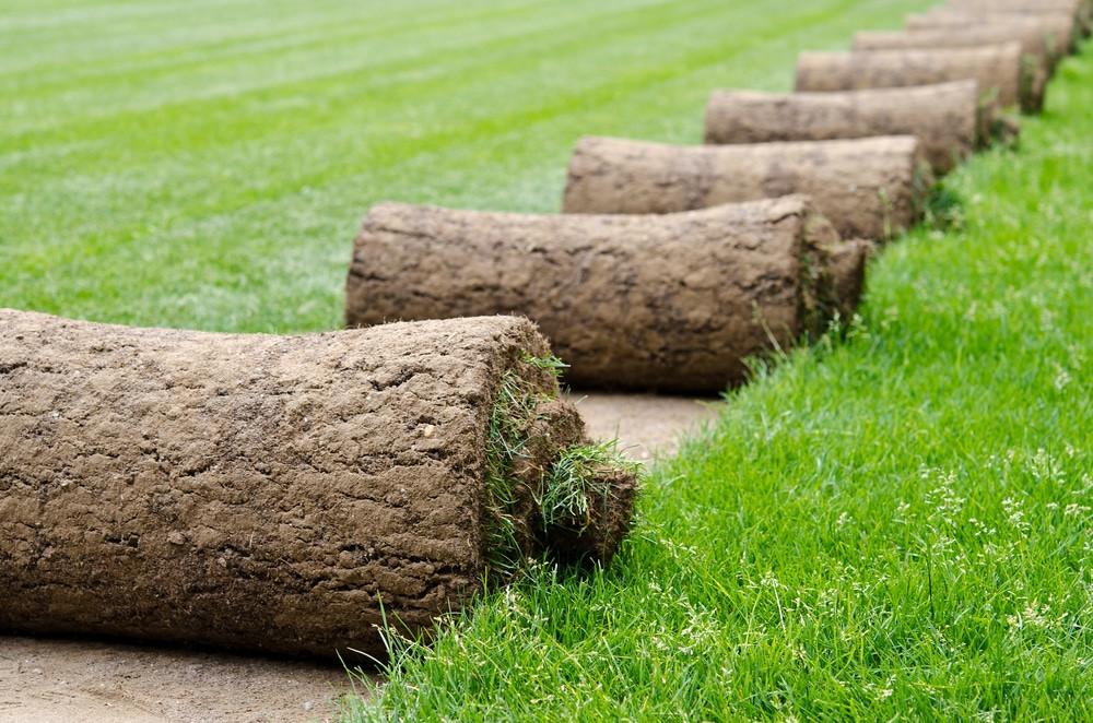 Grass Malaysia