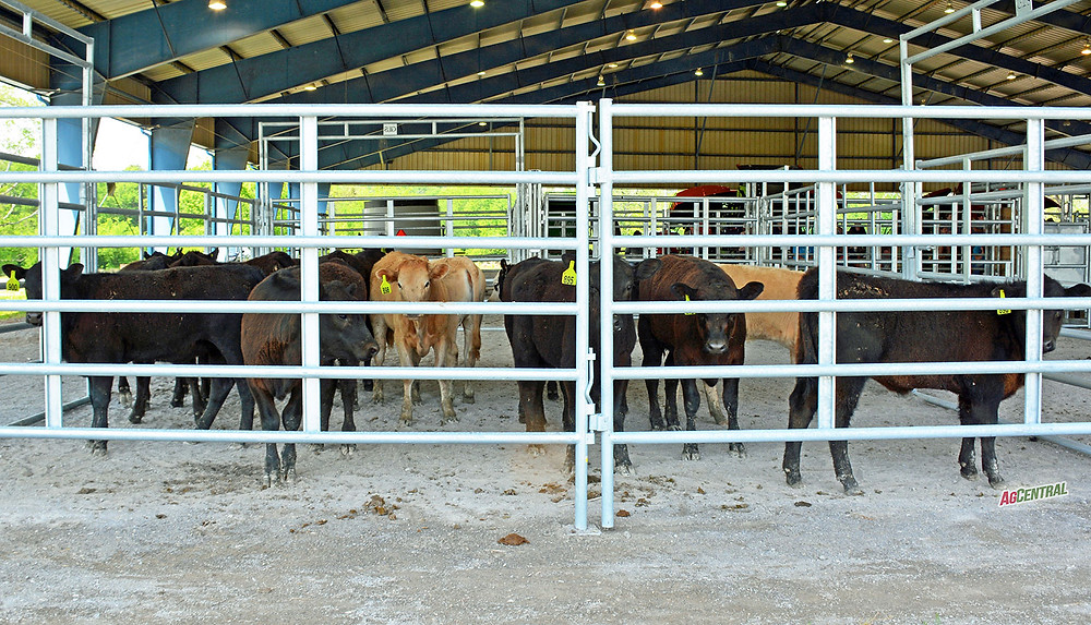 Livestock Malaysia