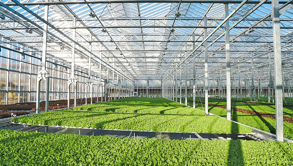 Greenhouse Contractor Malaysia