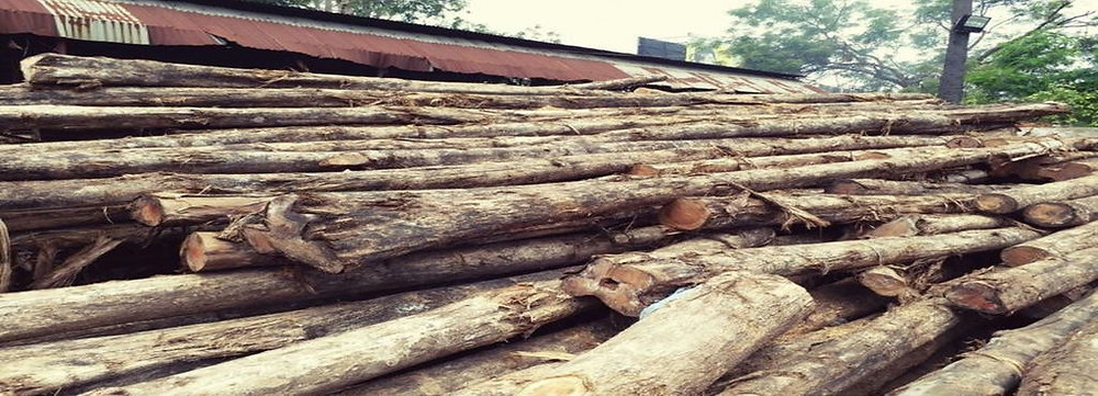 Raw Timber Supplier Malaysia