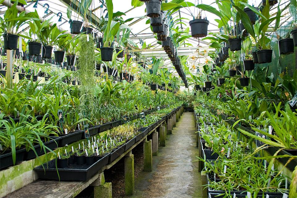 Plant Nursery Supplier Malaysia