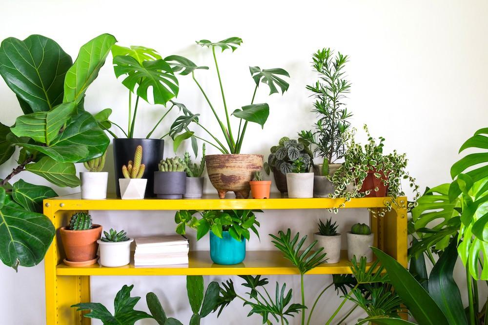 Garden Plant Supplier Malaysia