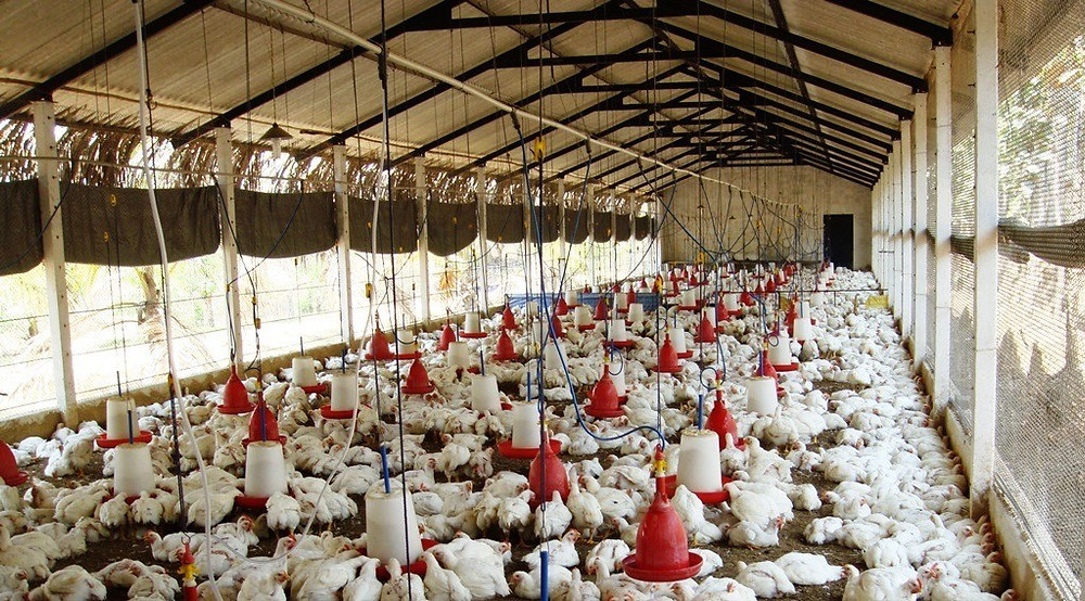 Poultry Management Malaysia