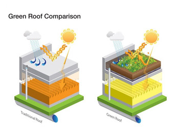Why Green Roof is so Good