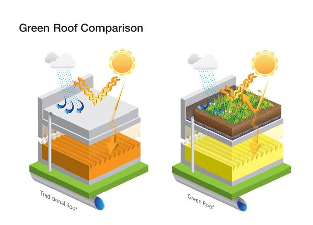 Traditional Roof vs Green Roof
