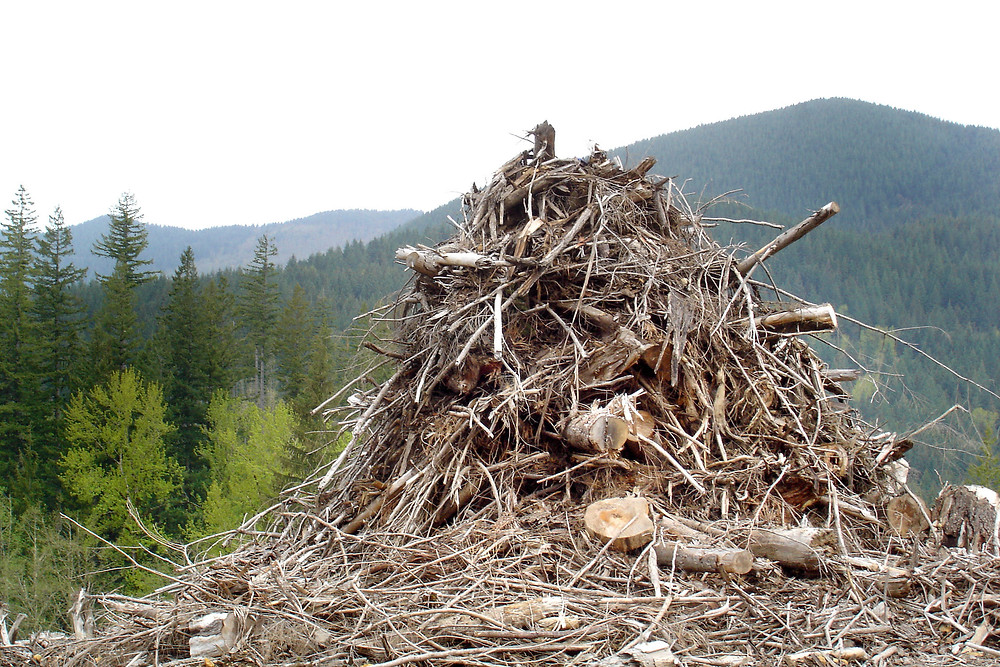 Forestry Residues Supplier Malaysia