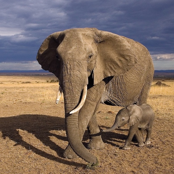 Suzi Eszterhas - World Renown Wildlife Photographer