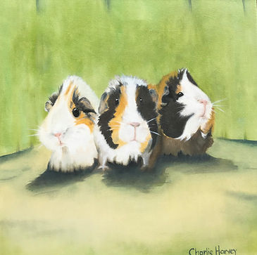 Charlene Atwell-Three Little Guinea Pigs predominantly white withblack and light tan markings