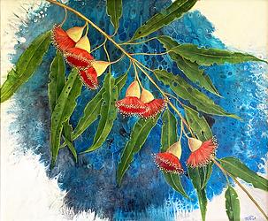 Marta B Australian Red Gum Blossoms.png