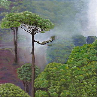 Meghana-Wagholikar_004_A-Lonely-Tree_ Trees in a misty forest with on dominant solitaty tree