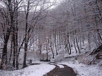 iAnnandale-James–IrenaWinterRoad.j Landscape intones of black and whitepg