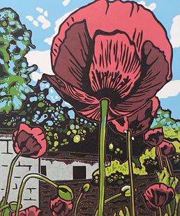 KimBlackshawPoppy. dark pink poppies with foliage