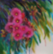 Judy Boyle  Flowering Gum png