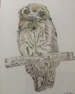 Gaye McKay.jpg Owl in muted tones ona branch