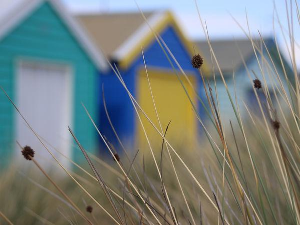 Susan Segal at the Beach. Colourful beach huts viewed through tall grasses