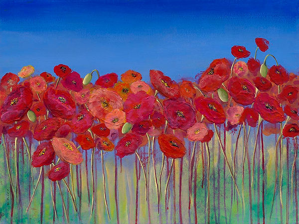 D-COX_ Heroes. field of poppies with bright blue sky.
