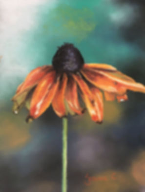 Orange flower with soft pale multicoloured  background Standing-Tall-by-Jeanne-Cotter (1).jpg