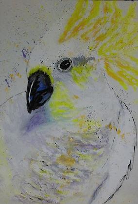 Wendy Moore - Cockatoo colour.jpg Sulphur crested cockatoo