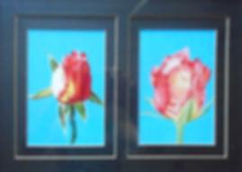 2 red rosebuds