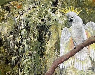 Marta b Yellow crested Cockatoo.jpg