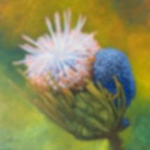 wildflower-tasmanian-oak-frame-bruce-pee