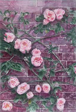 Wayne Boyle_Climbing the Wall.jpeg pink flowers on a trellis against a brick wall.