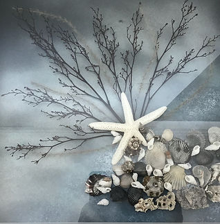 Tatjana Stupar Seashell Collection  Framed 3D work
