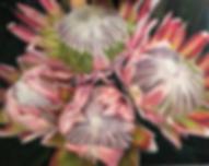 Bernadette Mc Conville pink wartahs.png