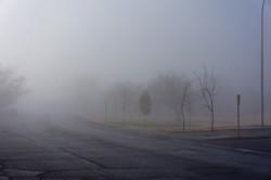 Lion's Park LC Foggy Morning