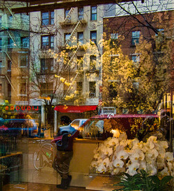 orchids in winter nyc