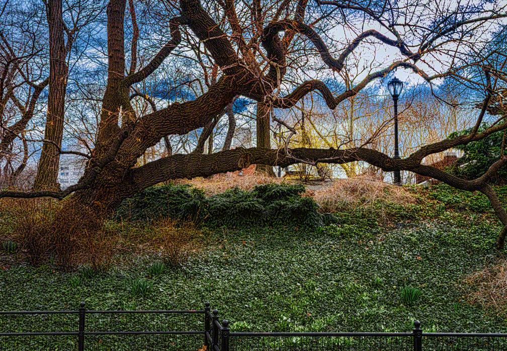 CP1353 tree