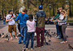 pigeons and tourists ws park