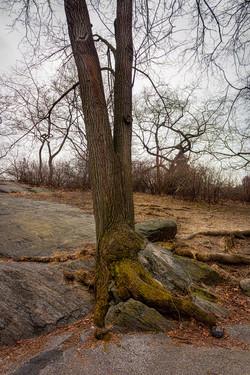 CP0200 V tree