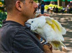 WSP Bird Man