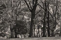 CP bw trees