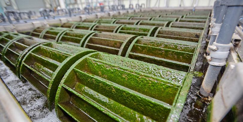 algaewheel - wheels.jpg