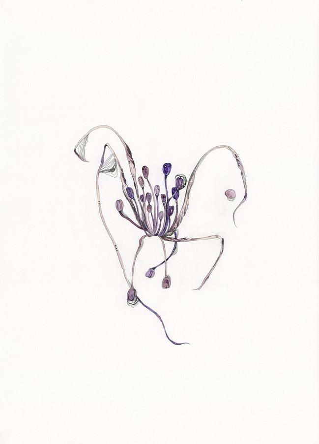 Witch's garlic