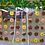 Thumbnail: Clear Donut Wall