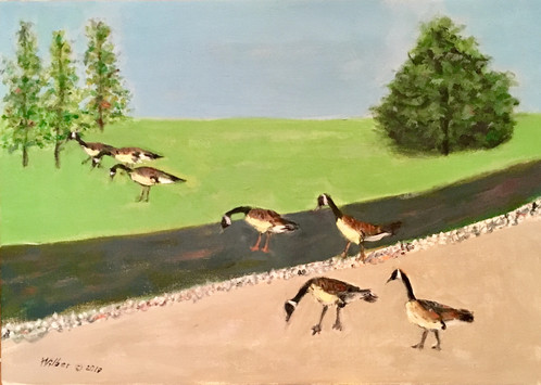 Canadian Geese Crossing the Road_1