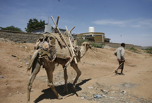 nomadic camel herder in the desert