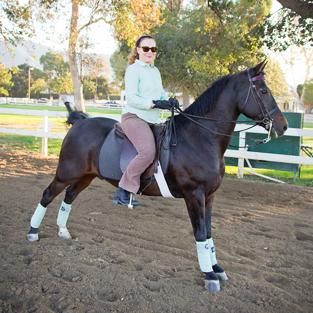 Sharon Grosshans, Morgan, American Morgan Horse, horse, Jim Bennett, Bennett Farms, Los Angeles Equestrian Center, Saddle Seat