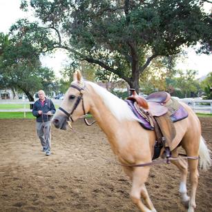 Bennett Farms, Jim Bennett, american quarter horse, lunging, horse trainer, western, los angeles equestrian center, burbank, laec, horse, horseback, riding, lessons, trainer, stables, equestrian center, horse training, trotting, trot, pony, boarding