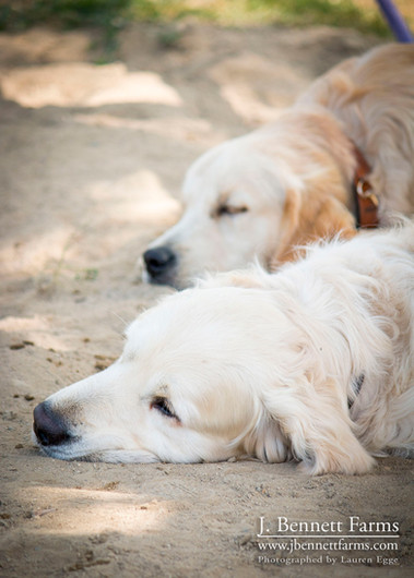 Bentley and Tucker taking a ringside nap
